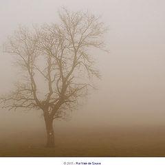 """фото """"fog (luquesio melo)"""""""