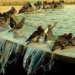 """photo """"On the """"velvet"""" season on waters..."""""""
