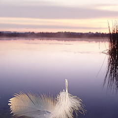 """photo """"The feather floating on the river"""""""