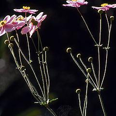 "photo ""Simple flowers"""