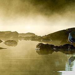 """photo """"Where the Gulls Waking Up"""""""