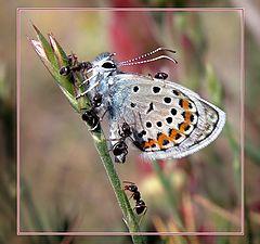 """фотоальбом """"Из жизни бабочек"""""""