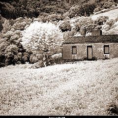 "фото ""house in IR (Regina)"""