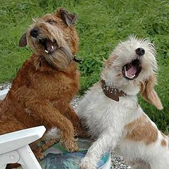 "фото ""The 'swinging' dogs!"""