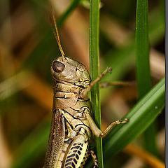 """photo """"The grasshopper"""""""