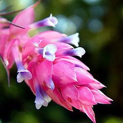 "photo ""Little flower"""