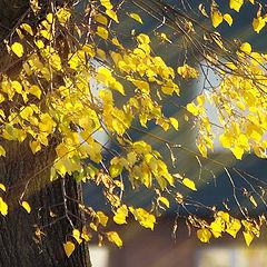 """photo """"Autumn mood"""""""