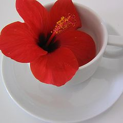 """фото """"a cup of flower"""""""