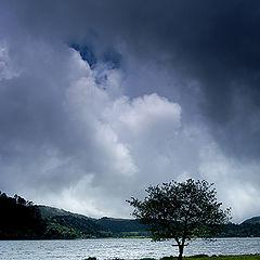 "фото ""tree (Nadezhda Kvitka)"""