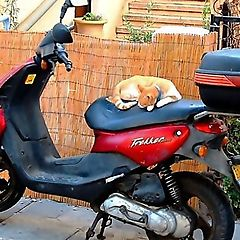 "photo ""Motocat"""