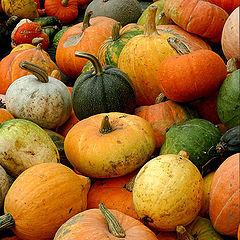 """фото """"pumpkins"""""""