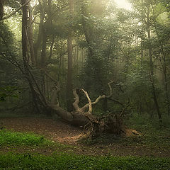"photo ""Early morning in a foggy wood..."""