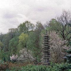 """photo """"Pagoda"""""""