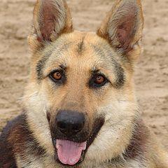 "фото ""dog's look"""
