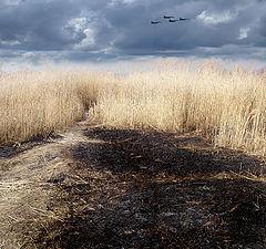 "photo ""The burned  ground"""