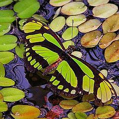 """photo """"thirsty butterfly"""""""