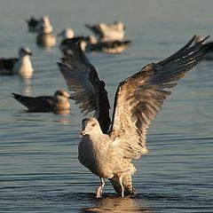 """фото """"Wings"""""""