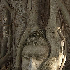 "фото ""Antique in the tree"""