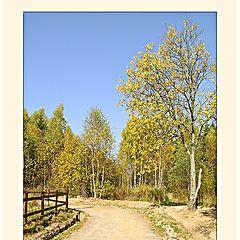 """photo """"The Autumn Light"""""""
