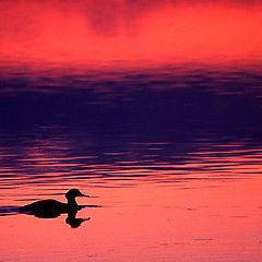 "фото ""Night swimming"""