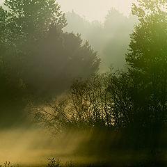 """фото """"Только о тумане"""""""