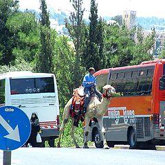 """фото """"А верблюды лучше!..."""""""