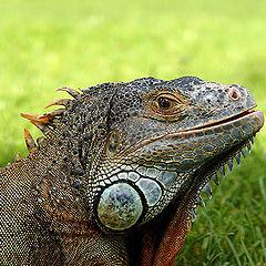 """photo """"Pensive dragon"""""""