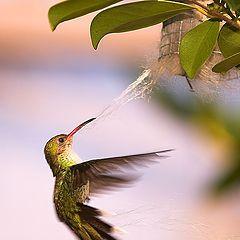 "photo ""Nest Building"""