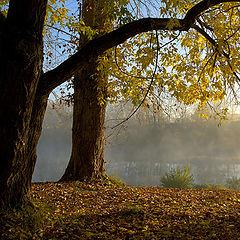 """фото """"Autumn fairy tale"""""""