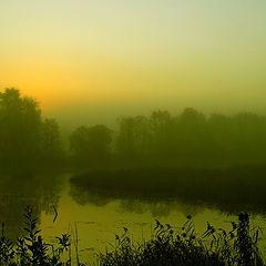 "фото ""Misty morning"""