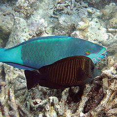"""фотоальбом """"Мальдивы. Подводные и не только..."""""""