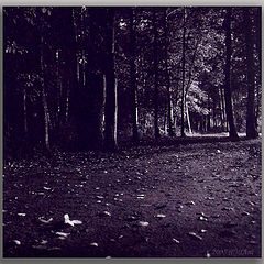 "album ""night walks"""