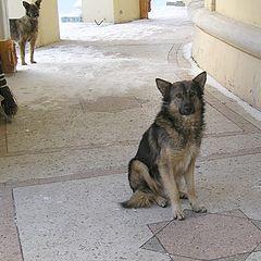 "photo ""Stray dogs"""