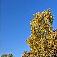 """фото """"Вот и осень . . ."""""""