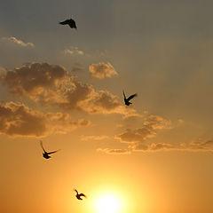 """photo """"sunset 5"""""""
