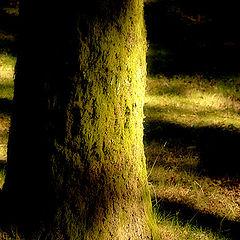 "фото ""shadow (Olga M)"""