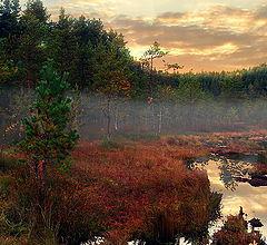 "photo ""Evening on the bog"""