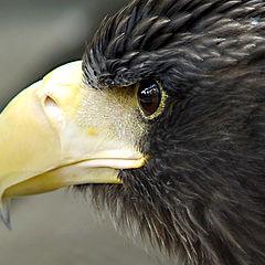 "photo ""Aquila"""