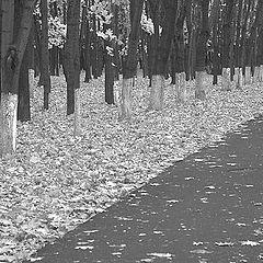 "фото ""autumn outlines"""