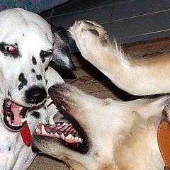 "фото ""cute puppies"""