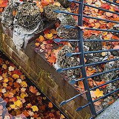 "photo ""Autumn in the Park #1"""
