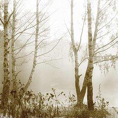 """фото """"Туманное утро у Очаковского пруда в Москве"""""""