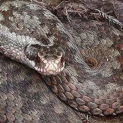 """фото """"Змея"""""""