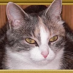 """фото """"Кошачий портрет"""""""