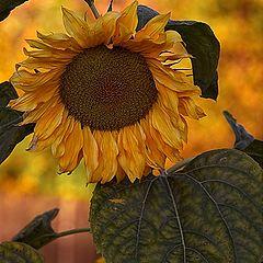 "фото ""Sun....."""