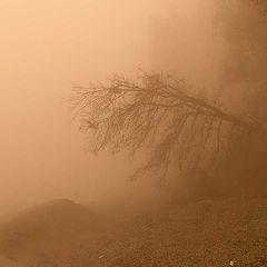 """фото """"На дне тумана"""""""