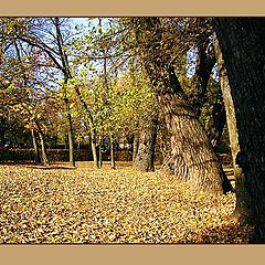"photo ""Lawn in autumn"""