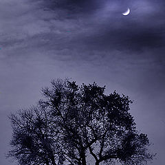 "фото ""Misterious night"""
