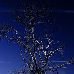 "фото ""tree (Irina Savkina)"""