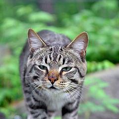 """фото """"Кот."""""""